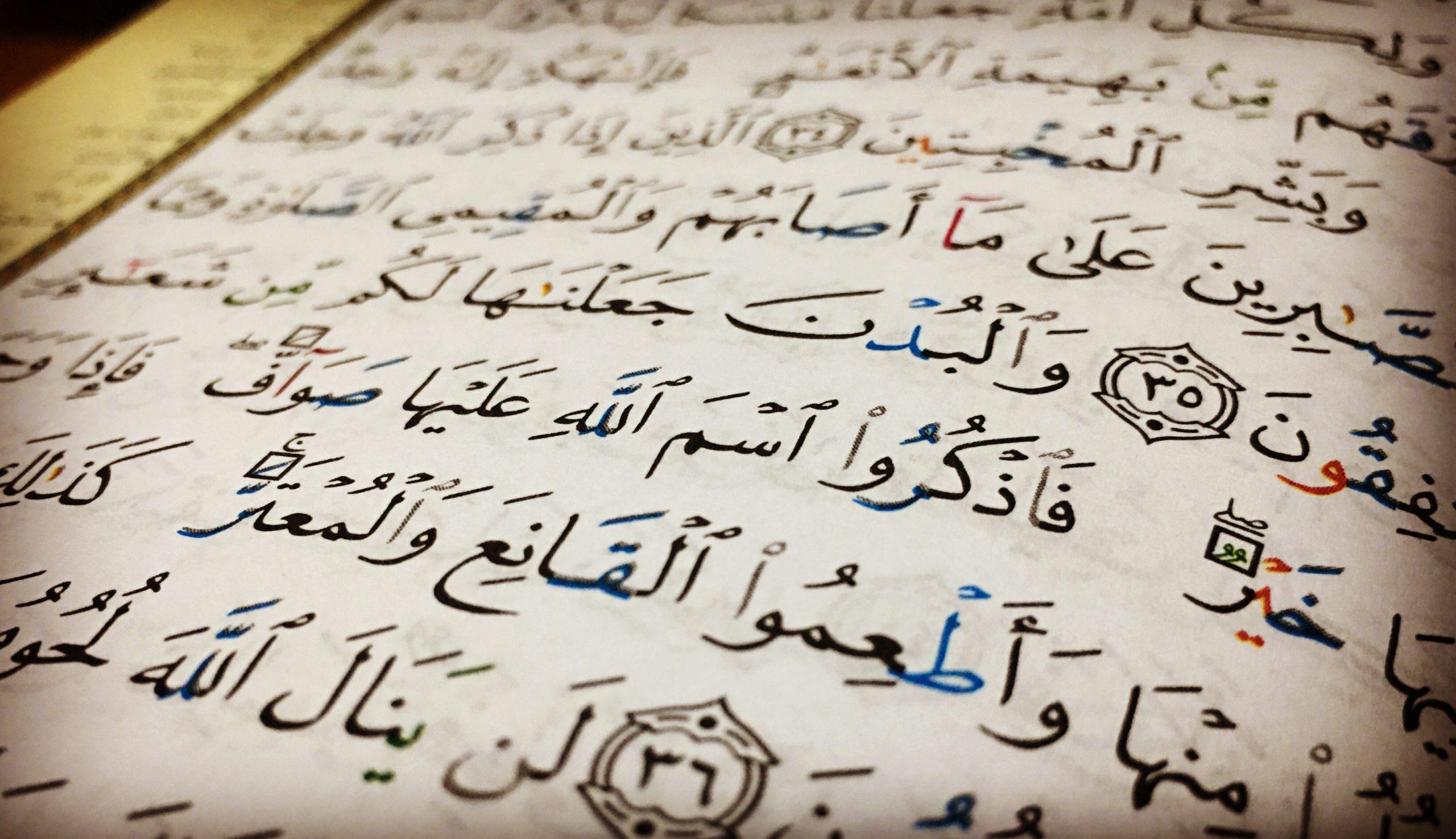 Livreto: Condições da Oferta Sacrificial (Udhiyah)