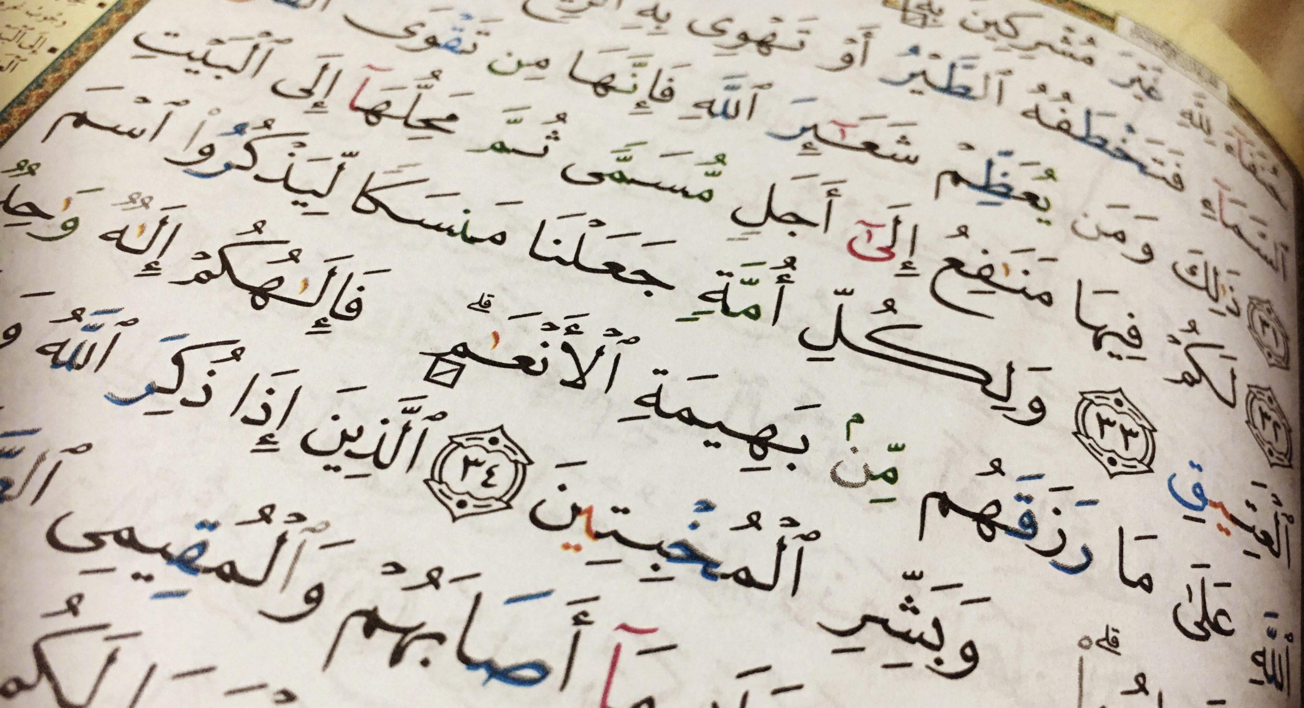 Livreto: O que se deve dizer ao abater Al-Udhiyah (Sacrifício)